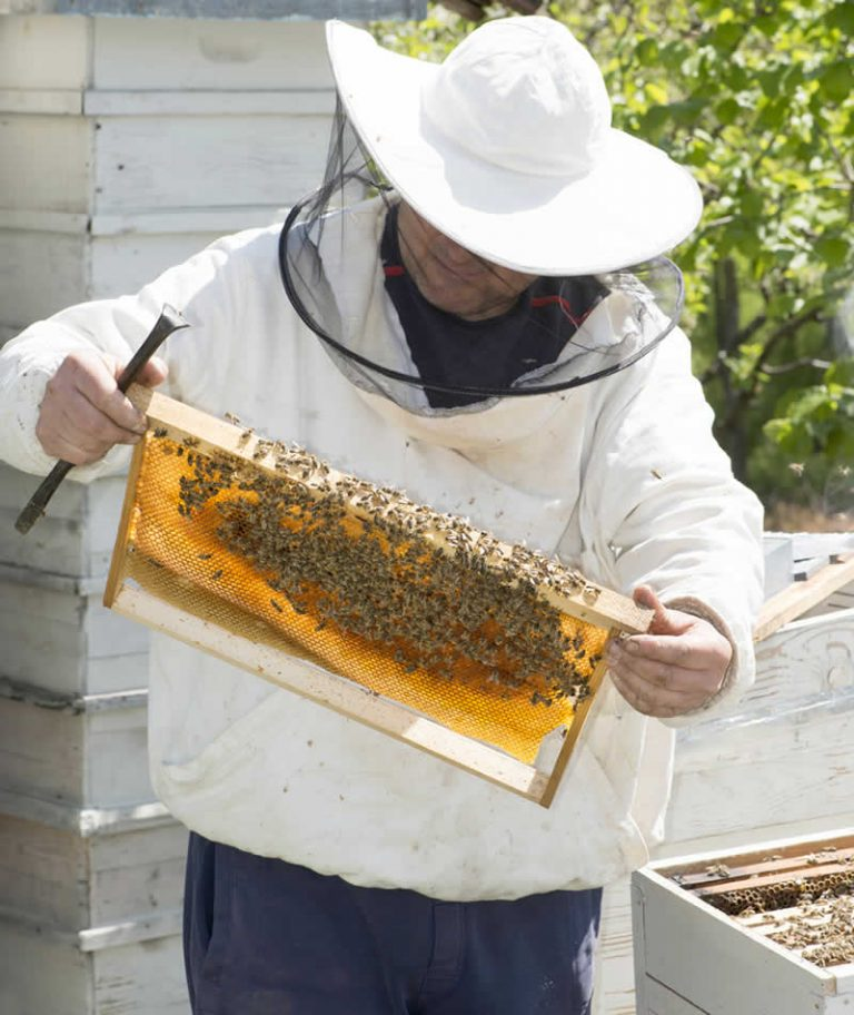 Beehive Frame Inspection on About Page